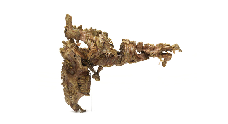 The gristle gun as seen in the movie eXistenZ.